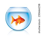 goldfish in bowl isolated on...   Shutterstock .eps vector #250666258