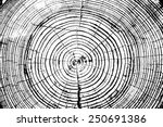 Tree Rings Saw Cut Tree Trunk...