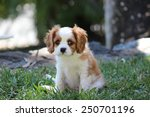 Stock photo puppy dog 250701196