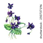 Bouquet Of Violets. Violets...