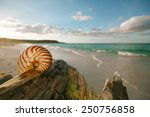 Постер, плакат: nautilus sea shell on