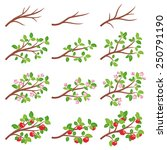 apple tree branches at... | Shutterstock .eps vector #250791190
