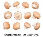 mushrooms isolated | Shutterstock . vector #250804996