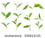 Tea Leaf Isolated On White...