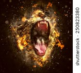 Stock photo lion the king of beasts and the most dangerous animal of the world 250823380