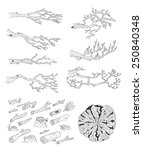branches. tree rings. logs.... | Shutterstock .eps vector #250840348