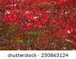 Red Autumn Leaves On A Wall ...
