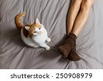 Stock photo cat sitting on the bed near male legs in socks and looking up 250908979