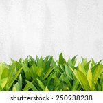 green tree leaves over white... | Shutterstock . vector #250938238