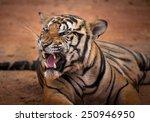 tiger action  | Shutterstock . vector #250946950