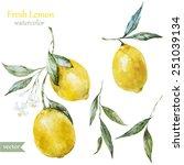 lemon  watercolor   fruit   ...   Shutterstock .eps vector #251039134