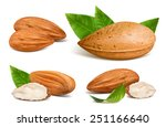 almonds with kernels and leaves.... | Shutterstock .eps vector #251166640