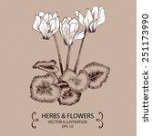 cyclamen flower. hand drawn...   Shutterstock .eps vector #251173990