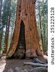 sequoia in sequoia national... | Shutterstock . vector #251225128