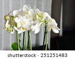 orchid | Shutterstock . vector #251251483