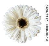 white gerbera isolated  | Shutterstock . vector #251278060
