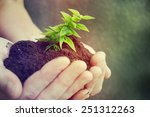 hand and plant | Shutterstock . vector #251312263