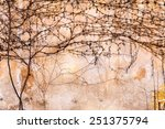 Dry Trunks And Branches Of...