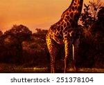 Gorgeous Tall Giraffe In Brigh...