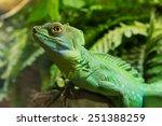Zoo Green Iguana Reptile...