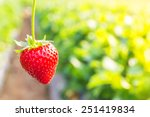close up shot strawberry with... | Shutterstock . vector #251419834