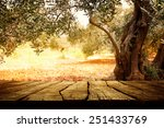 wooden table with olive tree | Shutterstock . vector #251433769