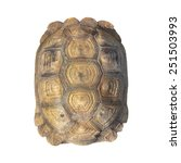 Stock photo tortoise shell brown color pattern or texture from giant turtle on white background closeup 251503993
