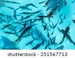 Fishes In Aquarium Or Reservoi...