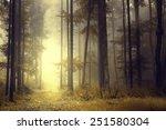 fantasy orange forest with... | Shutterstock . vector #251580304
