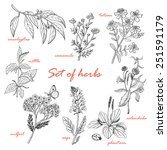 set of isolated herbs in sketch ... | Shutterstock .eps vector #251591179