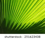 Beautiful Palm Leaves Of Tree...