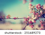 Stock photo blossom tree over nature background spring flowers spring background 251689273