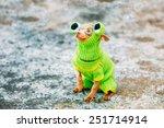 beautiful tiny chihuahua dog... | Shutterstock . vector #251714914
