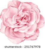 Stock vector beautiful light pink red rose flower isolated on white background vector illustration 251767978