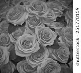 roses in black and white... | Shutterstock . vector #251770159