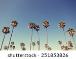 california palm trees in... | Shutterstock . vector #251853826