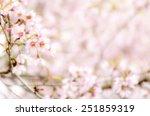 sweet sakura blossom blured...   Shutterstock . vector #251859319