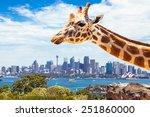 giraffe at  zoo  sydney looks... | Shutterstock . vector #251860000