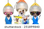 Stock photo group or team of dogs at the groomer or hairdresser under drying hood holding scissors hair 251899840