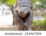 The Heart Shape Bark Of Tree