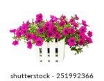 pink flowering petunia in pot... | Shutterstock . vector #251992366