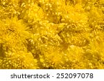 colorful design pattern of... | Shutterstock . vector #252097078