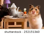Stock photo hamster drinking coffee hamster drinking coffee 252151360