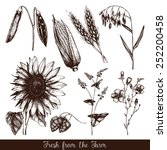 vector set of  ink hand drawn...   Shutterstock .eps vector #252200458
