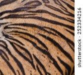 texture tiger skin | Shutterstock . vector #252334216
