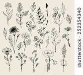 floral set  hand drawn. vector | Shutterstock .eps vector #252354340