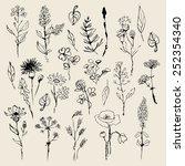floral set  hand drawn. vector | Shutterstock .eps vector #252354340