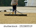 farmer drying coffee  dries... | Shutterstock . vector #252385519