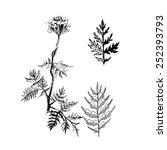 herbs | Shutterstock .eps vector #252393793