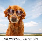a cute golden retriever by a... | Shutterstock . vector #252481834